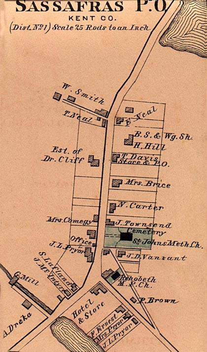 Sassafras 1876